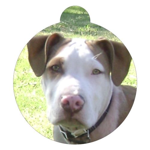 American Pit Bull Terrier Picture ID tag